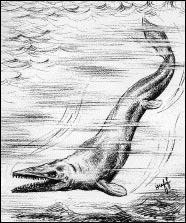 a mosasaur drawing by W. G. Huff